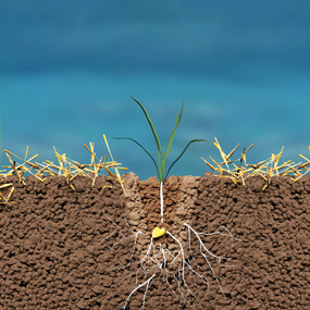 SEEDING SYSTEM = ZONE CULTIVATION